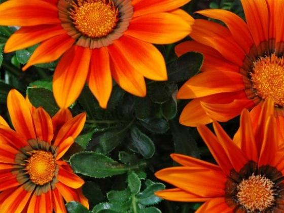 Floricultura Jardim das Flores